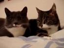 Коты Разборка