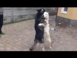 Dogs &amp Kaoma - Lambada