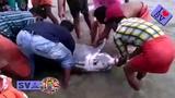 Dolphin Show Dolphin Rescue