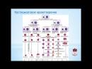 Алефиров А Н Фитотерапия лейкозов и лимфом Ч 1