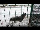 Животные в Детском парке легко переносят крымские морозы