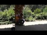 Испанская гитара в парке Гуэль. Барселона
