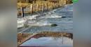В США сняли на видео переплывающих автотрассу лососей
