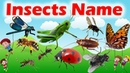 Insects For Learning | Insects Bugs For Children || All Insects For LKG/UKG ||
