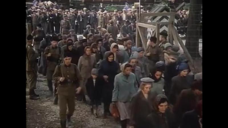 Escape from Sobibor 1987 Alan Arkin Joanna Pacula Rutger Hauer Jack Shepherd Jack Gold