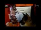 Смешные Приколы с Котами и Кошками под музыку