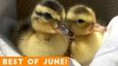 Ultimate Animal Reactions Bloopers of June 2018 | Funny Pet Videos