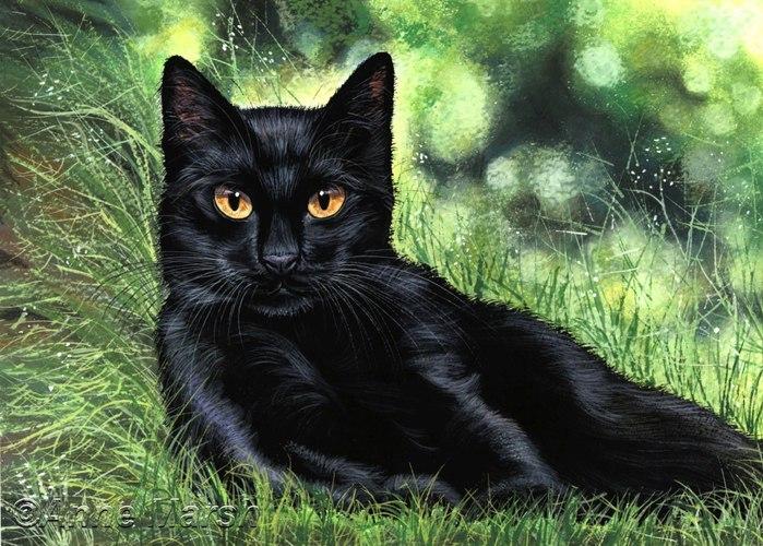Народные поверья, связанные с котами, о которых Вы не знали  VU0h3feb9PM