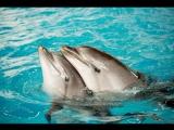 Новое шоу с дельфинами и морскими котиками в Казанском дельфинарии!