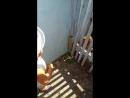 кормим курочек