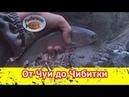 Рыбалка в Горном Алтае. От Чуи до Чибитки.