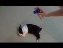 Разбудили кролика гудком