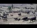 Yürek yakan kürtçe müzik şarkı uzun hava NEMÎNÎM VÎDEO KLİP 2016