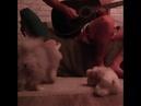NEBBIA TV EXLUSIVE - Поющая собака SING DOG mp4