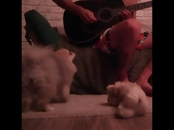 NEBBIA TV (EXLUSIVE) - Поющая собака (SING DOG) mp4