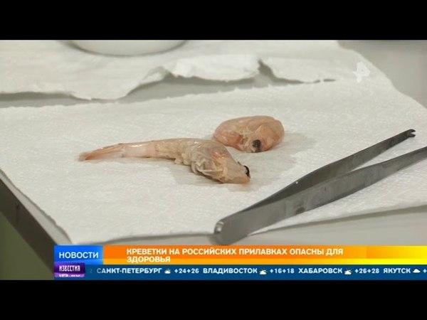Креветки на российских прилавках опасны для здоровья