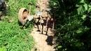фреза для мотоблока гусиные лапки Walk behind Tractor / Tiller / Rotavator / Cultivator