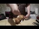 Ларсен Топ Королева Марго!3 месяца малышке! Очень активная девчонка, поставить большая проблема!😊💖💖💖