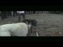 ВКО - 2-тур-клип.mp4