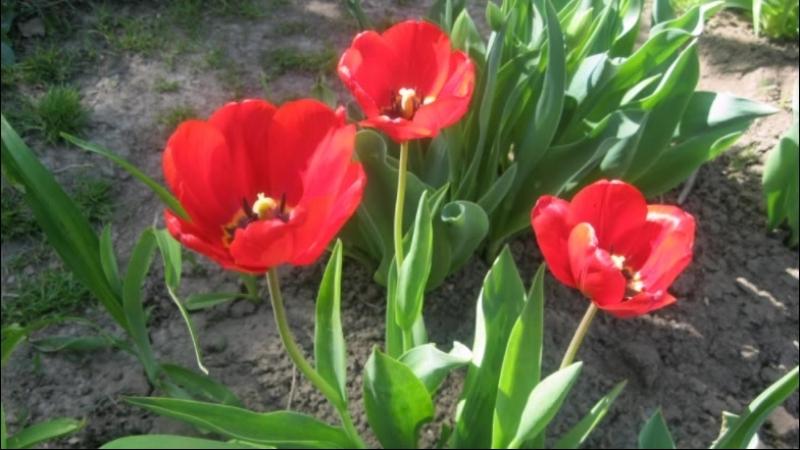 Весна в моём саду
