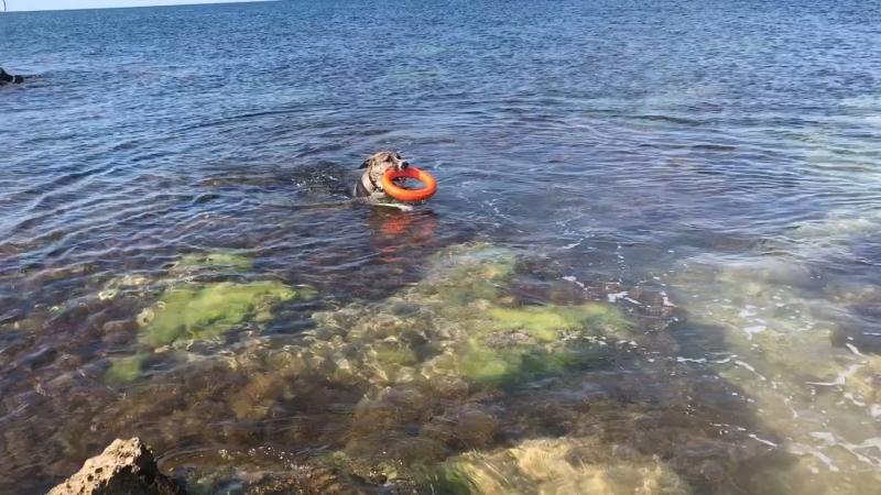 Байкал морской волк