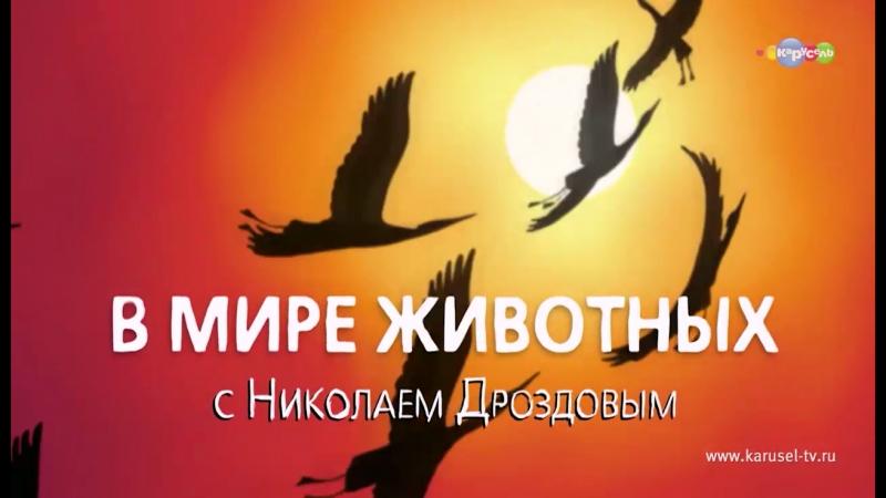 В мире животных с Николаем Дроздовым.