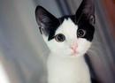 Вот 10 веских причин, почему вам нужно завести котенка.