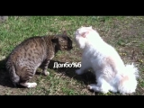 Разборка кошачья