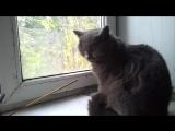 Дождливое утро. Бандитка на окне