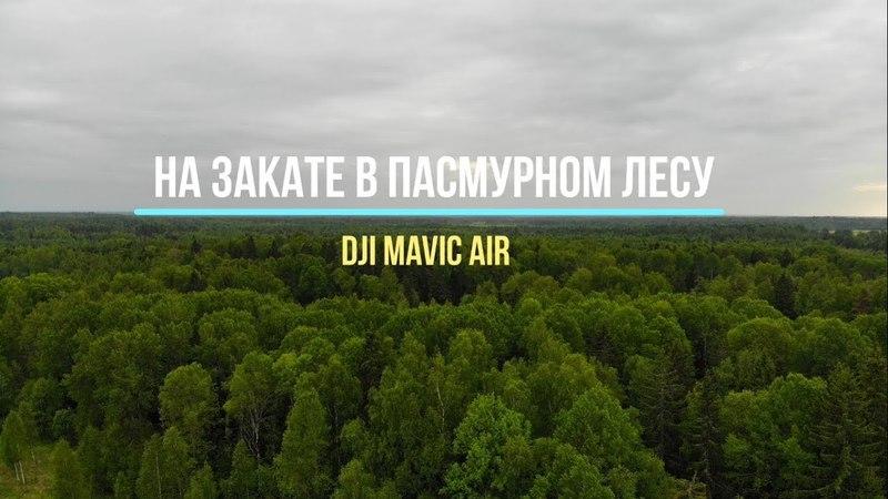 Dji Mavic Air. На закате в пасмурном лесу