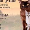 Питомник кошек редких пород  BLOSSOM PINK