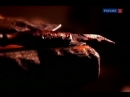 Ван Гог в плену у гениальности и безумия / 5 серия