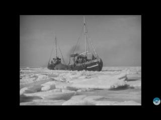fin Сохраним Каспийского тюленя