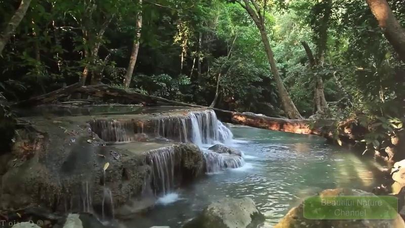 Звуки леса и воды, красивая природа   Звуки природы   Beautiful Nature