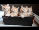 Синхронные котята коДнюкошек