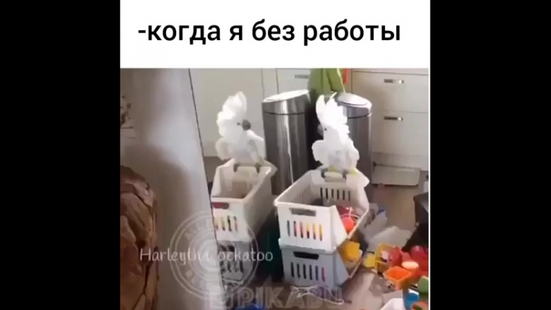 Попугай бестолоч