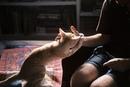 Сделай меня счастливым, и я сделаю счастливым тебя – вот что означает кошачье «мурмур».