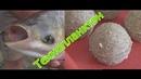 Как приготовить технопланктон для ловли толстолобика My fishing