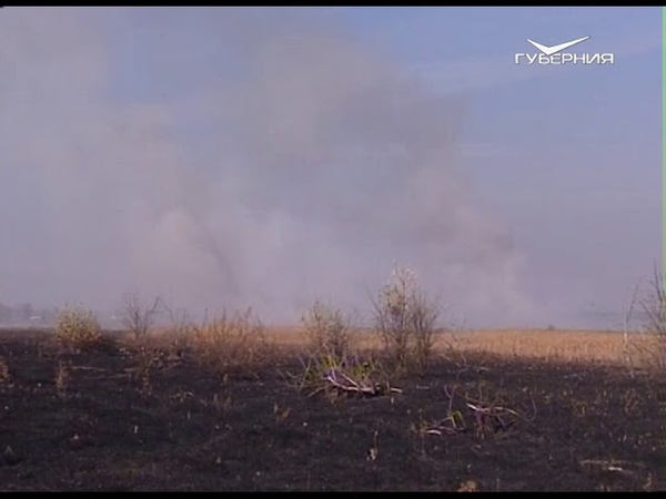 Россельхознадзор предупредил жителей Самарской области о штрафах за поджог сухостоя