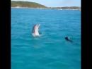 Просто счастливый дельфин и собака, плавающие вместе в океане 😍