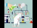 Растворитель старости препарат удаляющий стареющие клетки из организма 👩🏻🔬