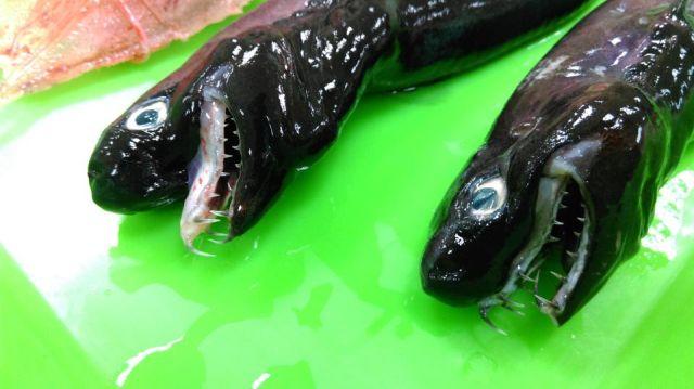 bzWJqQZfSsM - Акулы-Гадюки из Тихого океана
