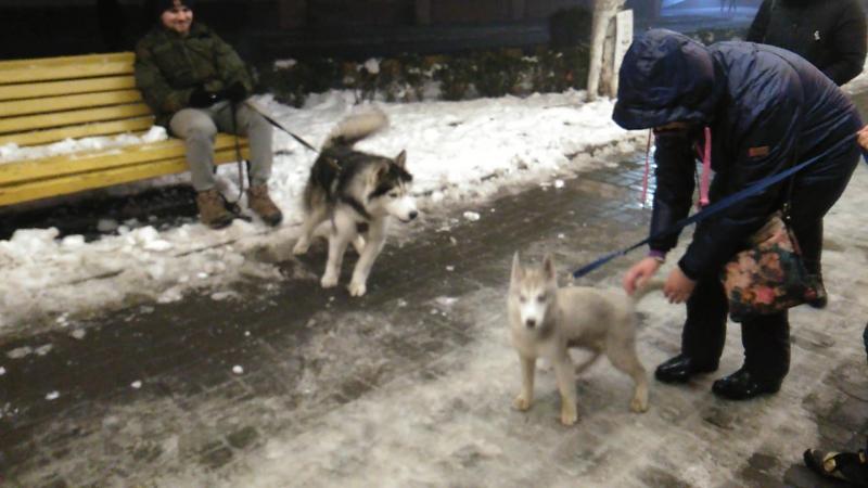 Разборка местных во Владикавказе