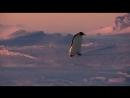 Пингвин. Шпион под прикрытием .1 серия
