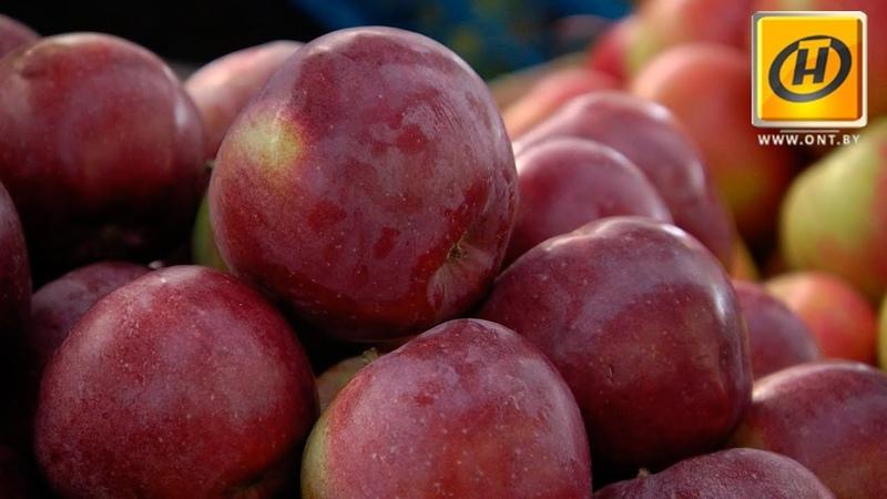 Как выбрать яблоки? Рейд на рынок