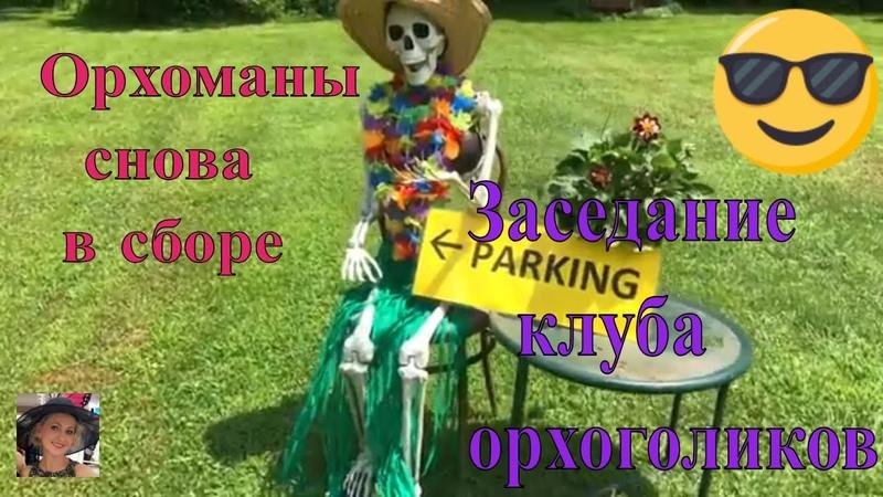 Заседание клуба орхоманов. Июль 2018. Про увлечённых людей, про цветущие орхидеи и про вкусную еду.