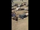 Иорданские пограничники расстреляли террористов ИГ*(запрещено в России) которые пытались, проникнуть на территорию страны, нелег