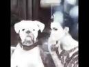 Rosacha Night Out w RubyRose Nas lojas e online Assista o filme completo no IGTV rosacha newcollection nightout