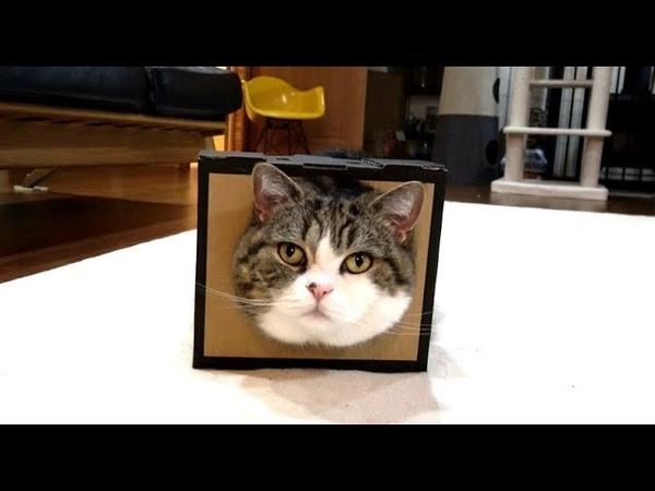 どうしても顔をいれておきたいねこ。-Maru insisted on putting on the box.-