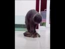 Покатай меня, большая черепаха!